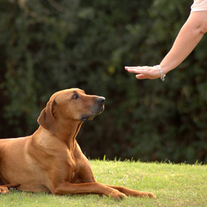 Dog training in East Grinstead and Lingfield Surrey